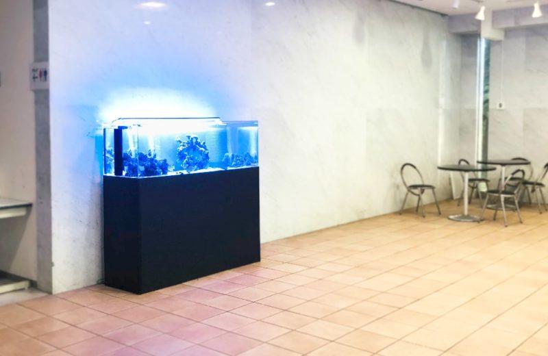 愛知県 人間環境大学様 150cm海水魚水槽 レンタル事例 水槽画像4