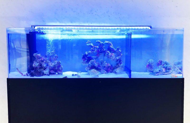 愛知県 人間環境大学様 150cm海水魚水槽 レンタル事例 水槽画像5