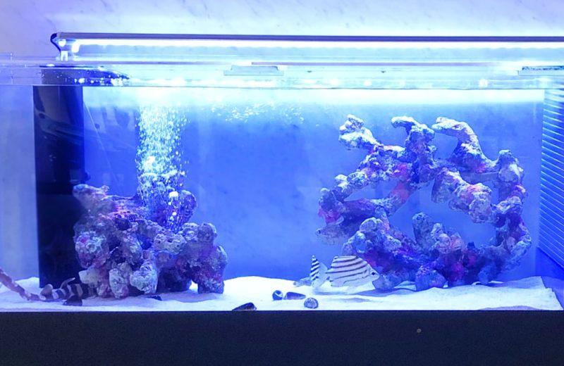 愛知県 人間環境大学様 150cm海水魚水槽 レンタル事例 水槽画像3