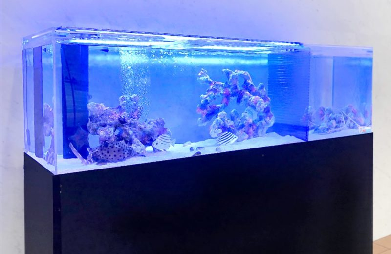 愛知県 人間環境大学様 150cm海水魚水槽 レンタル事例 水槽画像2