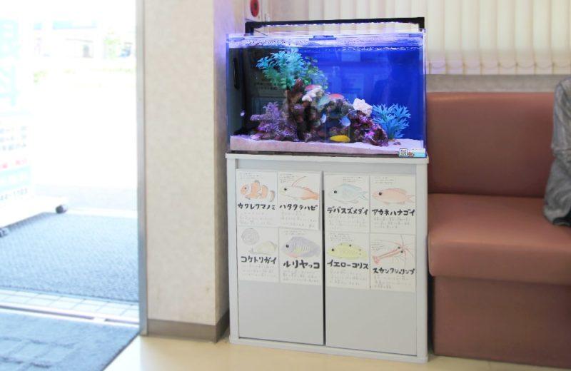 文京区 眼科 60cm海水魚水槽レンタル事例 その後の様子 水槽画像5