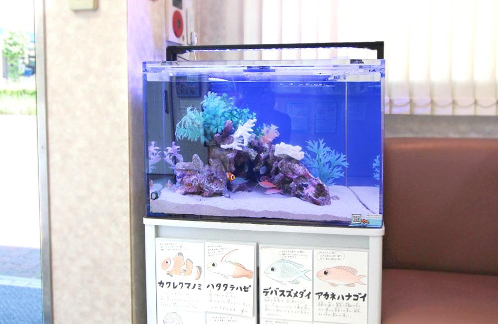 文京区 眼科 60cm海水魚水槽レンタル事例 その後の様子