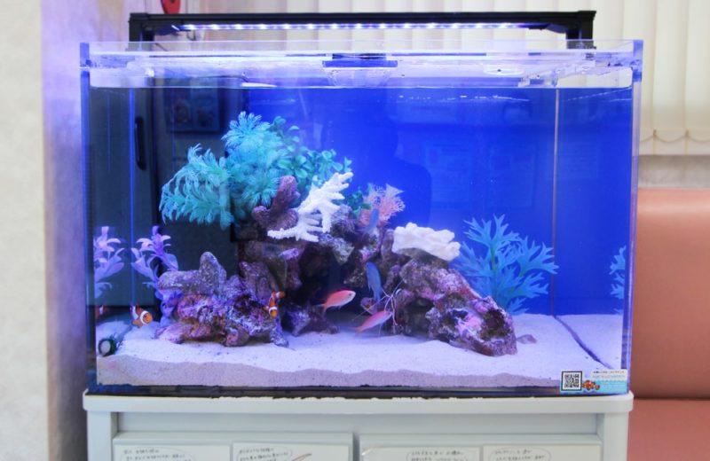 文京区 眼科 60cm海水魚水槽レンタル事例 その後の様子 水槽画像2