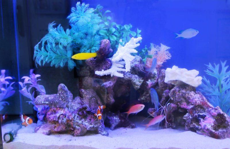 文京区 眼科 60cm海水魚水槽レンタル事例 その後の様子 水槽画像3