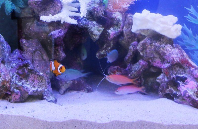 文京区 眼科 60cm海水魚水槽レンタル事例 その後の様子 水槽画像4