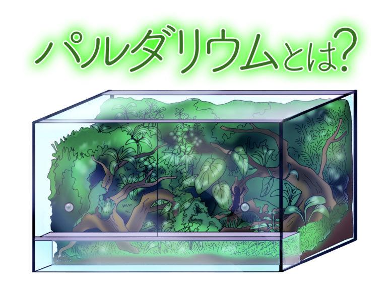 パルダリウム水槽とは!本格ブーム到来!熱帯植物水槽の魅力に迫りますのサムネイル画像