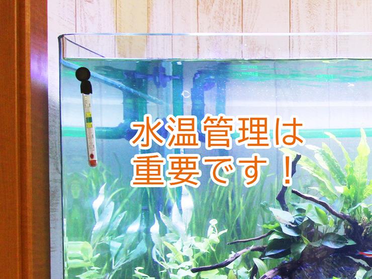 水温管理は重要です!熱帯魚水槽におすすめの水温計ベスト5のサムネイル画像