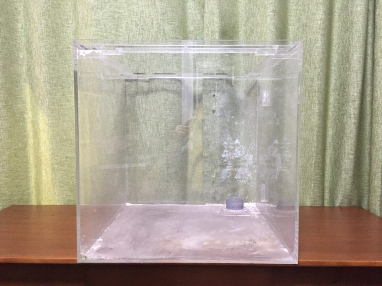 水槽の傷を消す方法!アクリル水槽・中古水槽を磨いてきれいにしようのサムネイル画像
