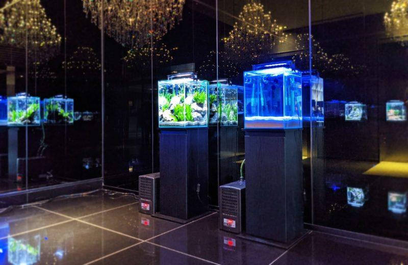 個人宅 マンションエントランスに水槽6台を短期レンタル 水槽レンタル事例 水槽画像2