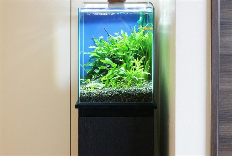 小型LEDライトでも水草が育つ!小型水槽用のおすすめLEDベスト10のサムネイル画像