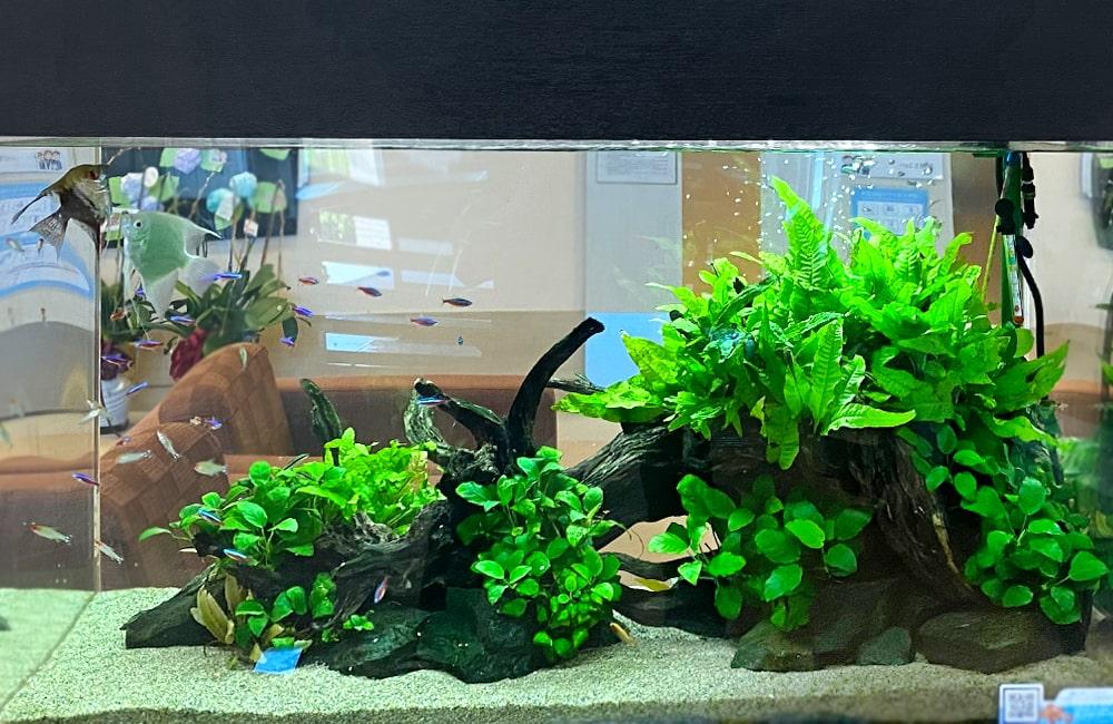 90cm 淡水魚水槽 レイアウト
