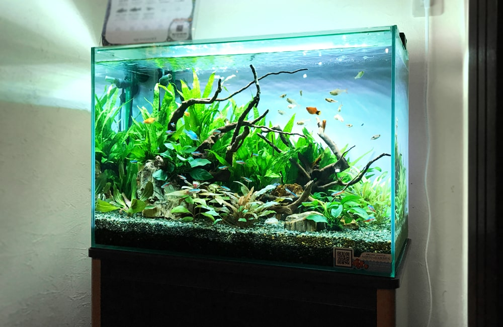 大阪府大阪市 飲食店に設置した60cm淡水魚水槽 水槽レンタル事例