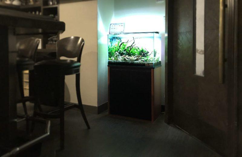大阪府大阪市 飲食店に設置した60cm淡水魚水槽 水槽レンタル事例 水槽画像5