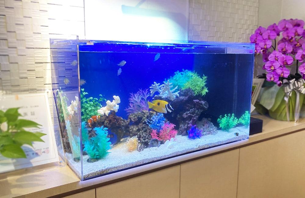 世田谷区 クリニック様 90cm海水魚水槽 メンテナンス事例 メイン画像