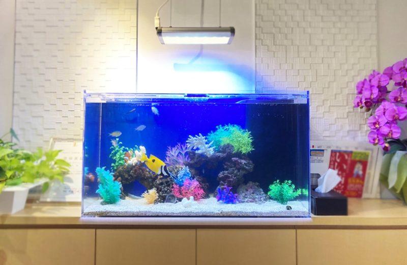 世田谷区 クリニック様 90cm海水魚水槽 メンテナンス事例 水槽画像2