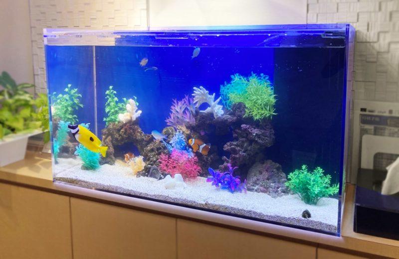 世田谷区 クリニック様 90cm海水魚水槽 メンテナンス事例 水槽画像4