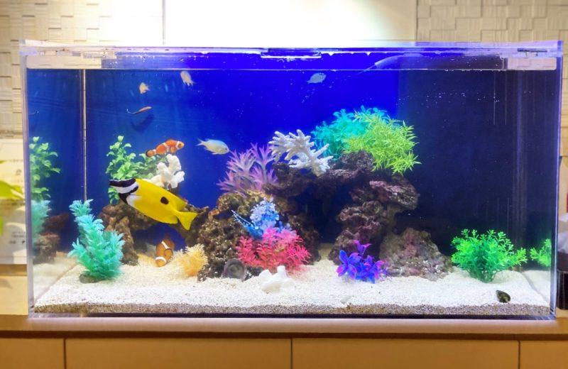 世田谷区 クリニック様 90cm海水魚水槽 メンテナンス事例 水槽画像3