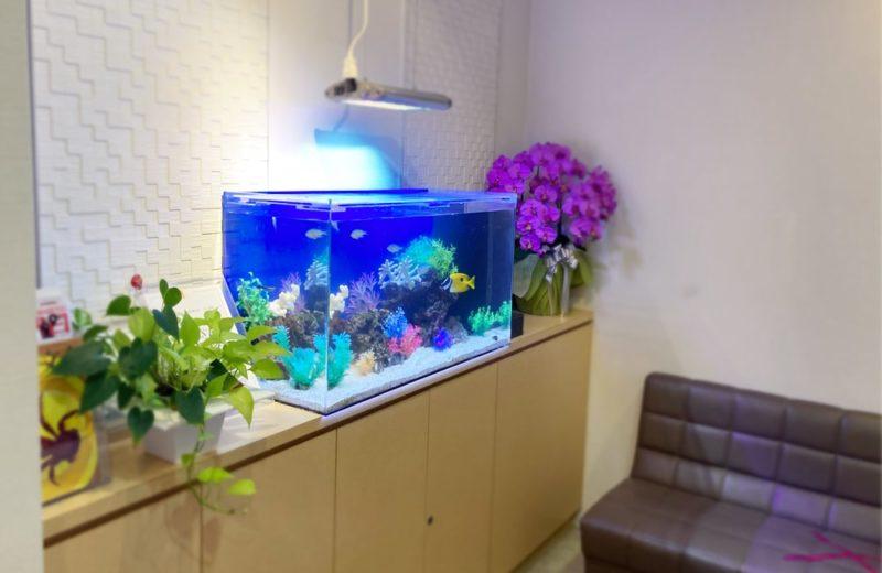 世田谷区 クリニック様 90cm海水魚水槽 メンテナンス事例 水槽画像5