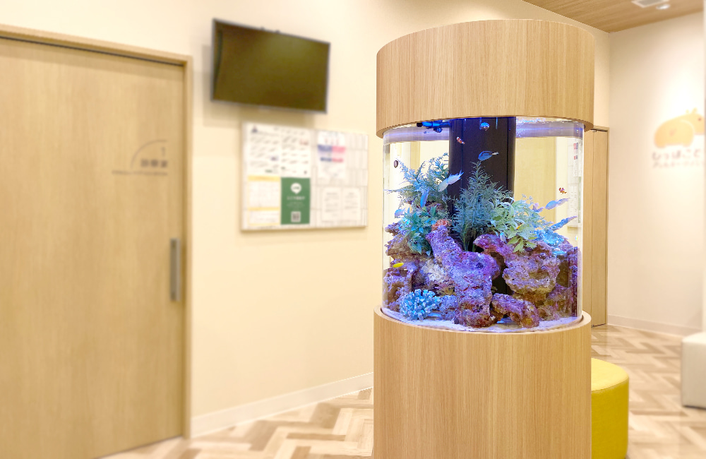 ひっぽこどもアレルギークリニック様 円柱 海水魚水槽販売・メンテナンス事例