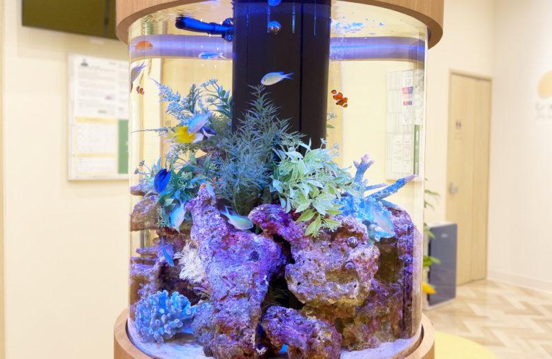 ひっぽこどもアレルギークリニック様 円柱 海水魚水槽販売・メンテナンス事例 水槽画像3