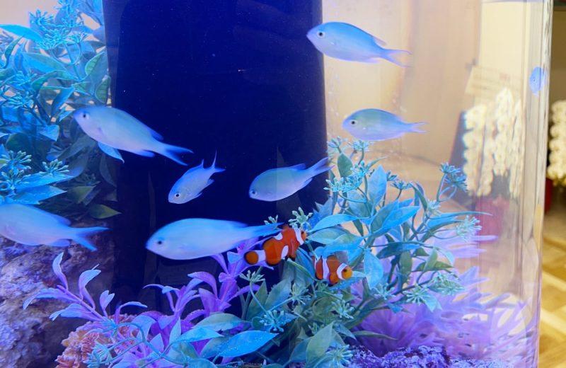 ひっぽこどもアレルギークリニック様 円柱 海水魚水槽販売・メンテナンス事例 水槽画像4