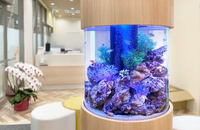 ひっぽこどもアレルギークリニック様 円柱 海水魚水槽販売・メンテナンス事例 水槽画像5
