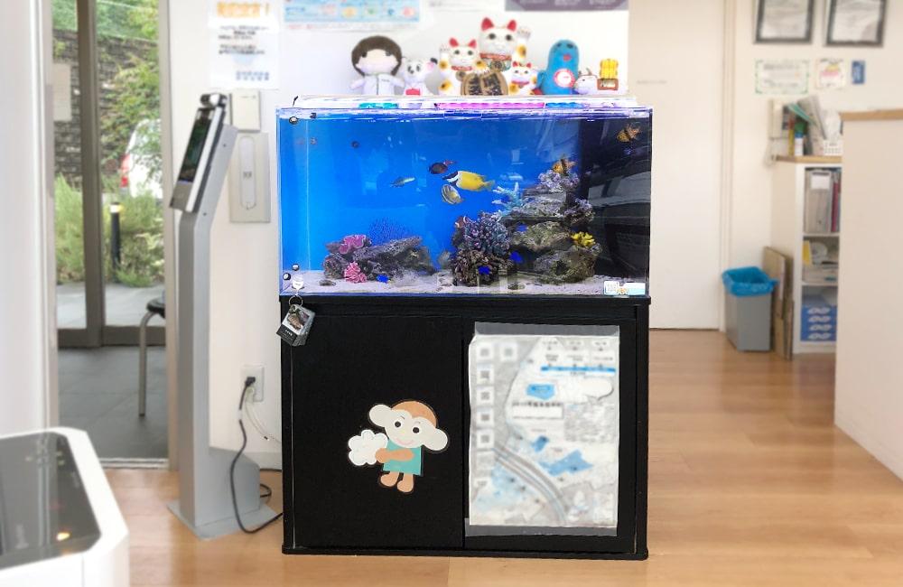 愛知県 なのはな薬局様 水槽レンタル事例 90cm海水魚水槽を設置しました メイン画像