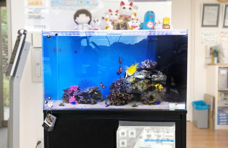 愛知県 なのはな薬局様 水槽レンタル事例 90cm海水魚水槽を設置しました 水槽画像2