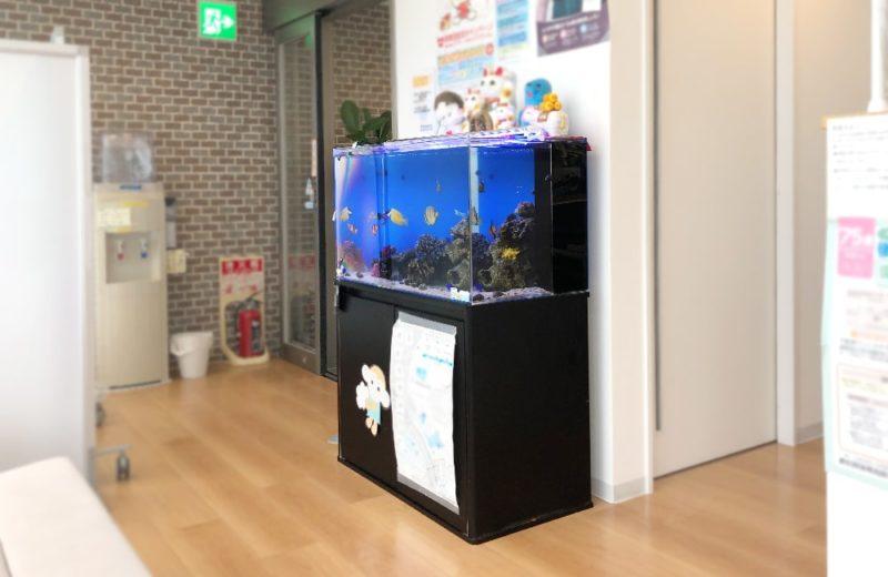 愛知県 なのはな薬局様 水槽レンタル事例 90cm海水魚水槽を設置しました 水槽画像4