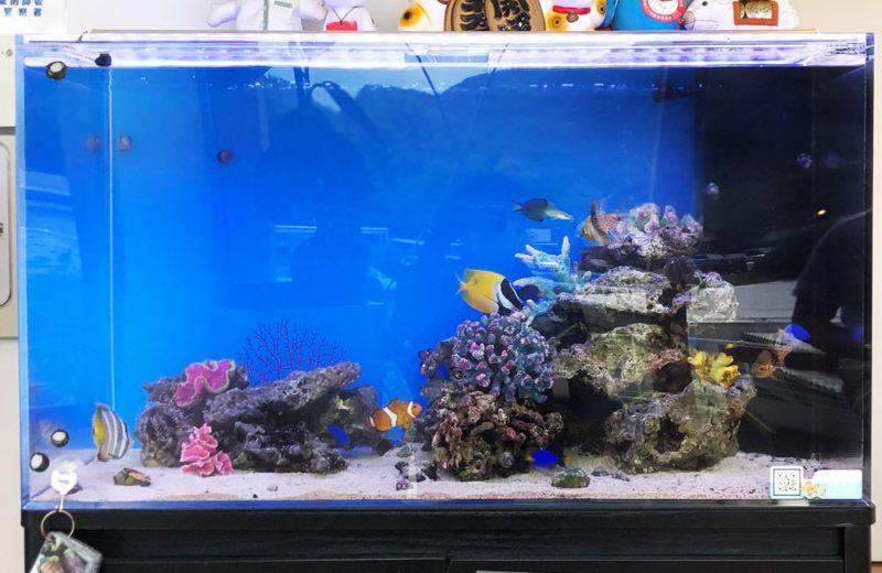 愛知県 なのはな薬局様 水槽レンタル事例 90cm海水魚水槽を設置しました 水槽画像3