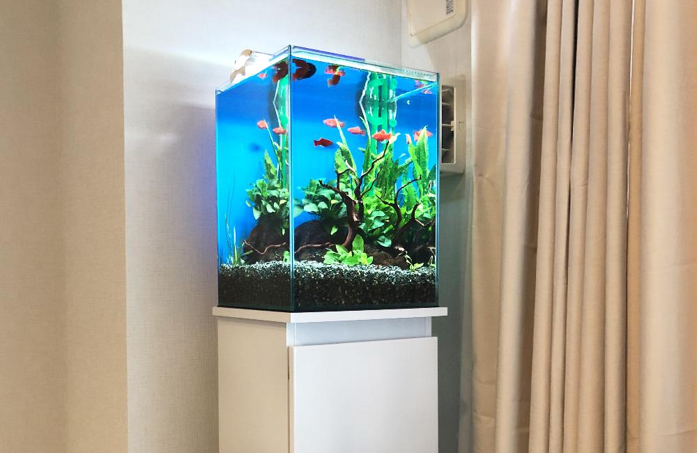 東京都 小型アクアリウム 30cm淡水魚水槽 レンタル事例 メイン画像