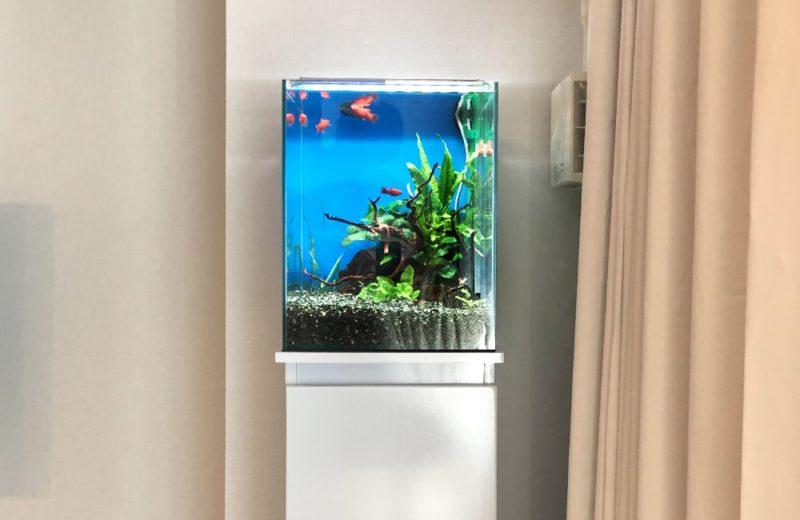 東京都 小型アクアリウム 30cm淡水魚水槽 レンタル事例 水槽画像2