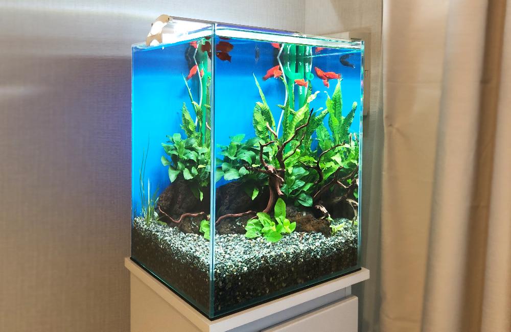 小型水槽 レンタル 熱帯魚