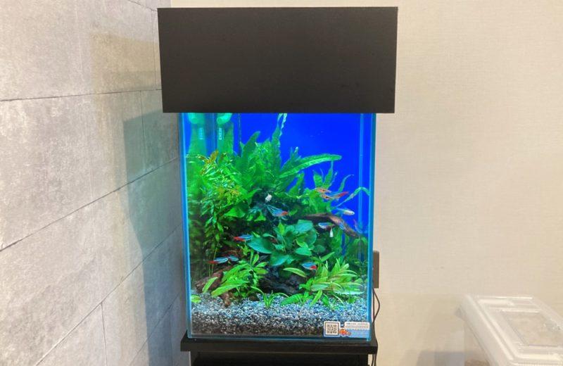 東京都 小型アクアリウム 30cm淡水魚水槽 レンタル事例 水槽画像4