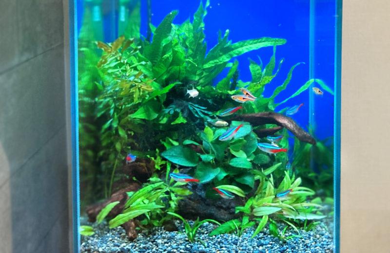 東京都 小型アクアリウム 30cm淡水魚水槽 レンタル事例 水槽画像5