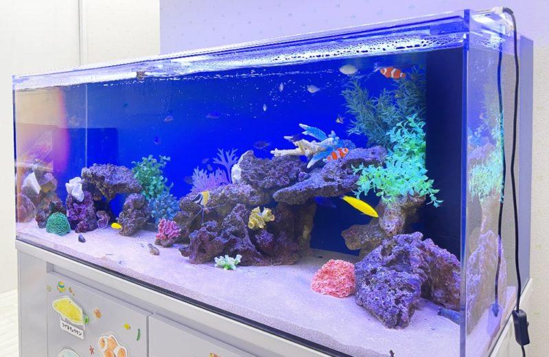 きっずあいらんど ふたば中川教室様 120cm海水魚水槽 水槽レンタル事例 水槽画像2