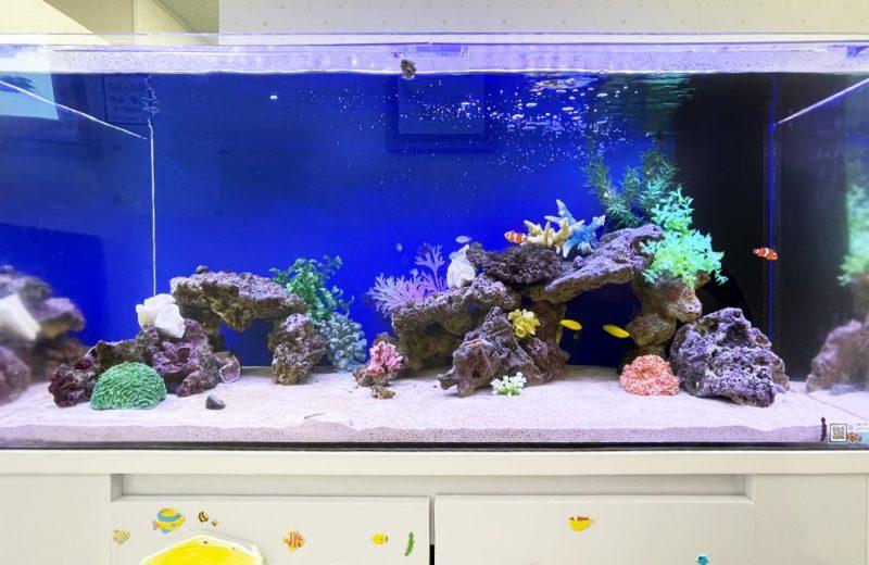 きっずあいらんど ふたば中川教室様 120cm海水魚水槽 水槽レンタル事例 水槽画像3