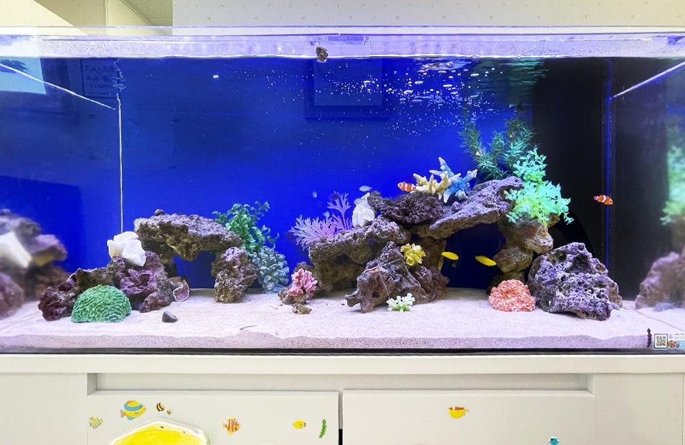 水槽レンタル 水槽レイアウト 海水魚水槽