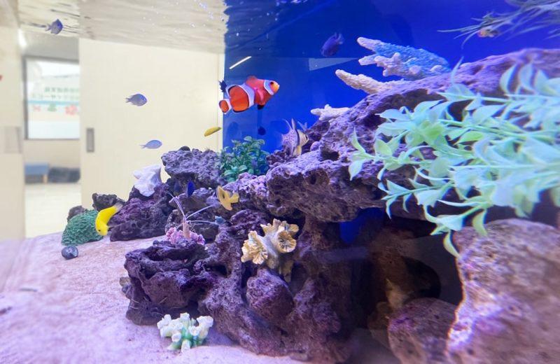 きっずあいらんど ふたば中川教室様 120cm海水魚水槽 水槽レンタル事例 水槽画像4
