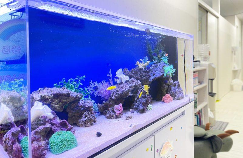きっずあいらんど ふたば中川教室様 120cm海水魚水槽 水槽レンタル事例 水槽画像5