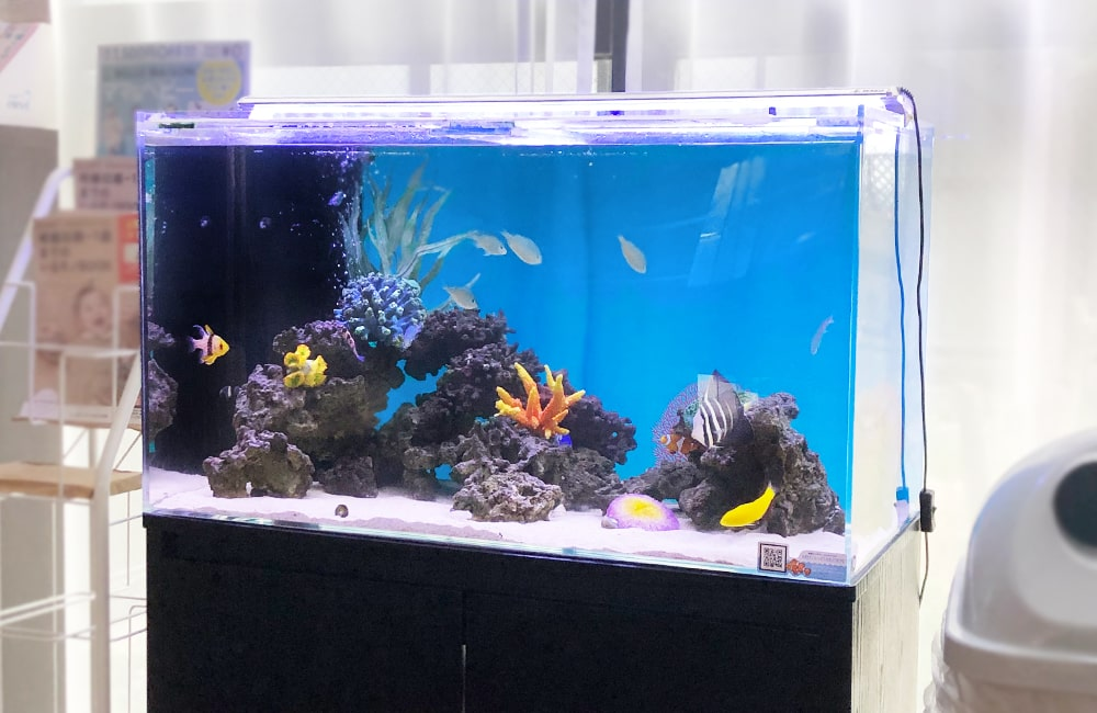 産科・婦人科クリニック様 90cm海水魚水槽 水槽メンテナンス事例 メイン画像