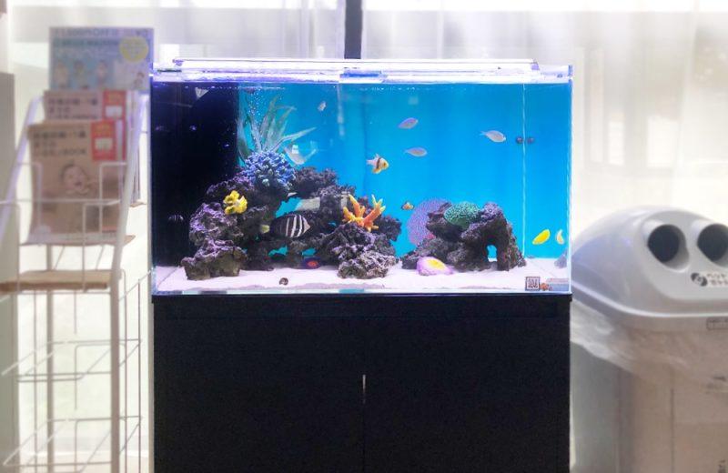 産科・婦人科クリニック様 90cm海水魚水槽 水槽メンテナンス事例 水槽画像2
