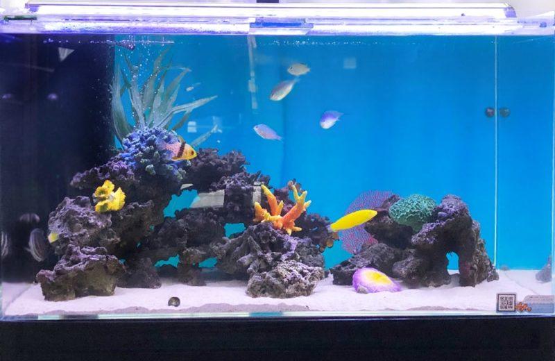 産科・婦人科クリニック様 90cm海水魚水槽 水槽メンテナンス事例 水槽画像3
