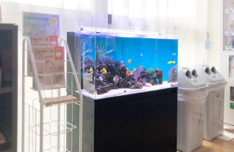 産科・婦人科クリニック様 90cm海水魚水槽 水槽メンテナンス事例 水槽画像4