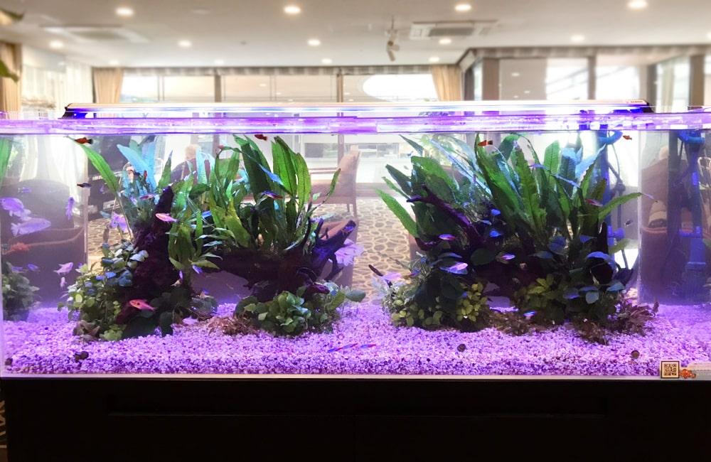 120cm淡水魚水槽 レイアウト レンタル