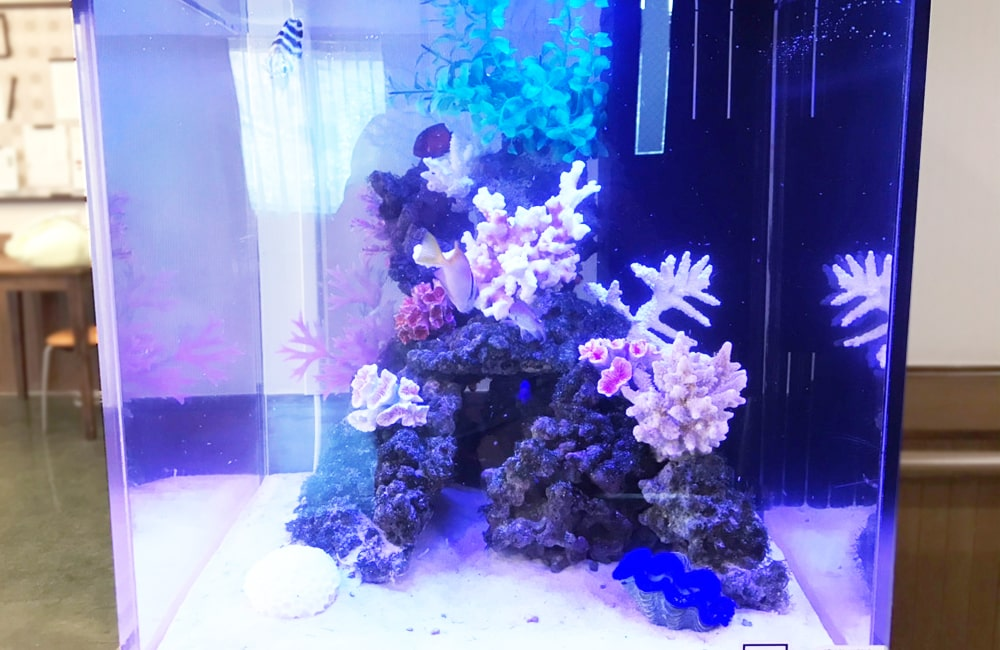小型海水魚水槽 レイアウト レンタル
