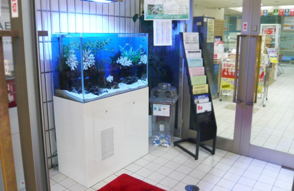 スポーツクラブ ルネサンス早稲田店様 90cm海水魚水槽 レンタル事例 メイン画像
