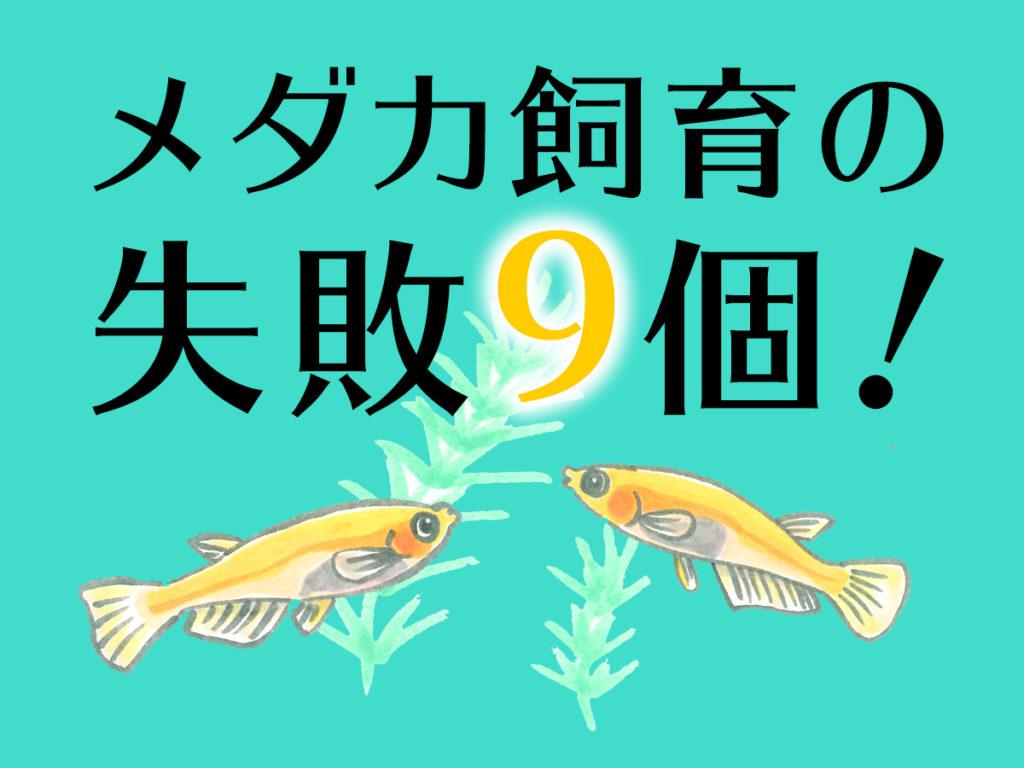 メダカ飼育の失敗9個!水合わせ・稚魚飼育などで初心者がやりがちなミス 水槽画像