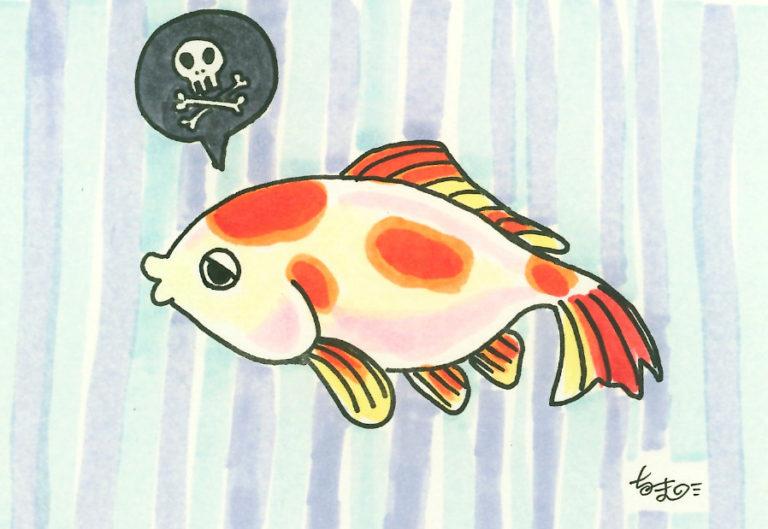 【金魚の病気まとめ】金魚の飼育で気をつけたい病気とその対策とは 水槽画像