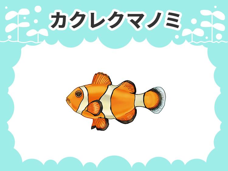 カクレクマノミ 水槽画像